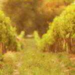 Il momento d'oro dell'oro nero: Aceto Balsamico di Modena grande protagonista con Acetaie Aperte e Champagne Experience