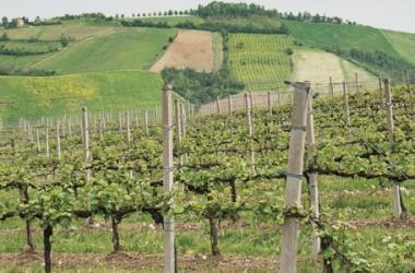Una settimana con l'Aceto Balsamico di Modena IGP, tra Stati Uniti e Francia